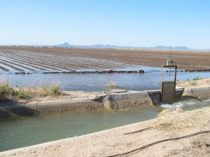 Flood irrigation 2