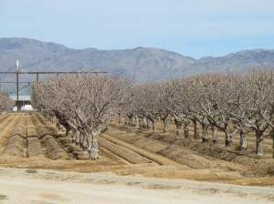 Irrigated trees