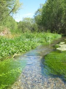 Hassayampa River 2