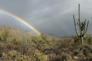 A rainbow at Saguary National Park