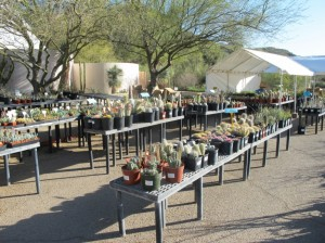 Dry-land plants for sale