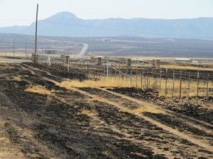 Burned grassland