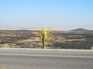 Along Route 90