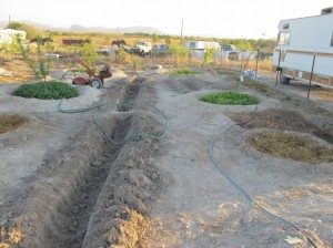 Trenching before plantng
