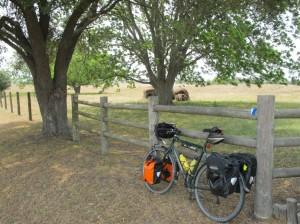 Rest stop under live oak